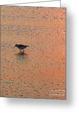Sandpiper On Shoreline Greeting Card