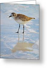 Sandpiper Reflection Greeting Card