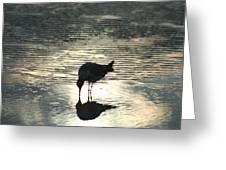 Sandpiper Reflection Greeting Card