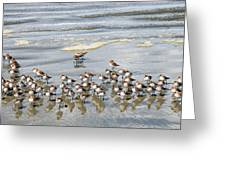 Sandpiper Reflections Greeting Card