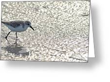 Sandpiper Reflections II Greeting Card