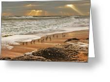 Sandpiper Sunrise Greeting Card