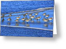 Sandpiper Symmetry Greeting Card