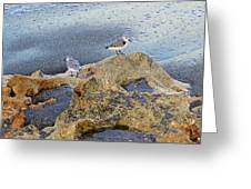 Sandpipers On Coral Beach Greeting Card