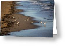 Sandpipers 3 Greeting Card