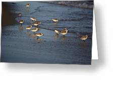 Sandpipers 5 Greeting Card