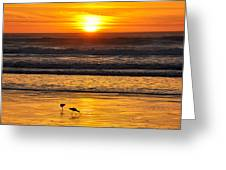 Sandpipers At Sunset Greeting Card