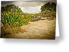 Sands And Grass Of Elafonisi Greeting Card