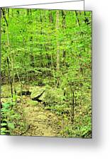 Sandstone Glade Of Shades Mountain Greeting Card