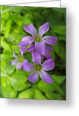 Sandy Creek Wildflowers Greeting Card