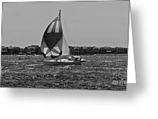 Sandy Hook Sailing II Greeting Card