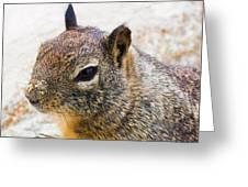 Sandy Nose Squirrel Greeting Card