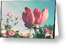 Sandy's Sea Rose Greeting Card