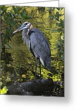 Sanibel Great Blue Heron Greeting Card