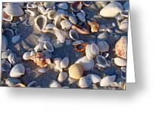 Sanibel Island Shells 1 Greeting Card