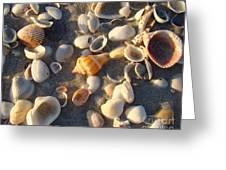 Sanibel Island Shells 2 Greeting Card