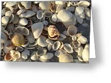 Sanibel Island Shells 3 Greeting Card