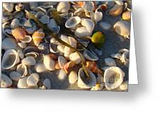 Sanibel Island Shells 4 Greeting Card