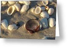 Sanibel Island Shells 5 Greeting Card