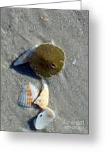 Sanibel Sand Dollar 1 Greeting Card