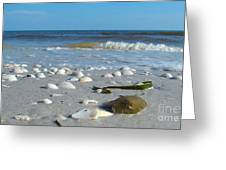 Sanibel Sand Dollar 2 Greeting Card