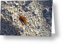 Sanibel Sea Oat Greeting Card
