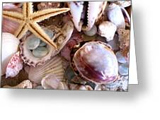 Sanibel Shells Greeting Card