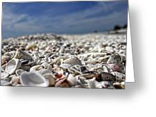 Sanibel Shells Greeting Card