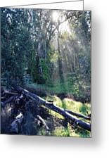 Santa Barbara Eucalyptus Forest II Greeting Card