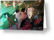 Santa Bring Tuna Greeting Card