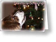 Santa - Christmas - Pet Greeting Card