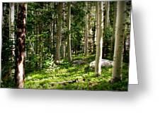Santa Fe Aspen Woodland Forest Greeting Card