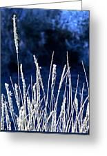 Santa Fe Grass 1 Greeting Card