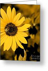 Santa Fe Sunflower 1 Greeting Card
