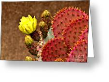 Santa Rita Cactus Greeting Card