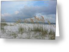 Santa Rosa Island National Seashore Greeting Card