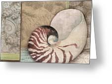Santa Rosa Shell II Greeting Card