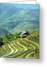 Sapa Rice Fields Greeting Card