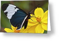 Sapho Longwing Yellow Oriented Greeting Card