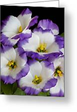 Sapphire Bluechip Lisianthus Greeting Card