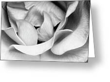 Sapphire Rose Bw Palm Springs Greeting Card