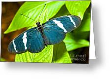 Sara Butterfly Greeting Card