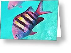 Sargeant Fish Greeting Card