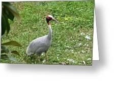 Sarus Crane Greeting Card