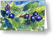 Saskatoon Berries Greeting Card