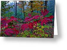 Sassafras Tea Anyone Greeting Card