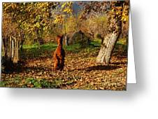 Sassy Alpaca Greeting Card by Susan Hernandez