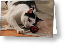 Sassy And The Rose Bud Greeting Card
