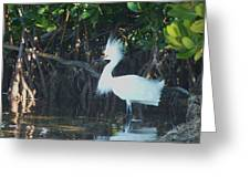 Sassy Snowy Egret Greeting Card