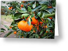 Satsumas Greeting Card